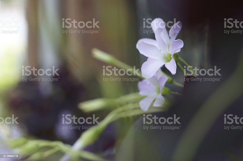 The Flower Awakening stock photo