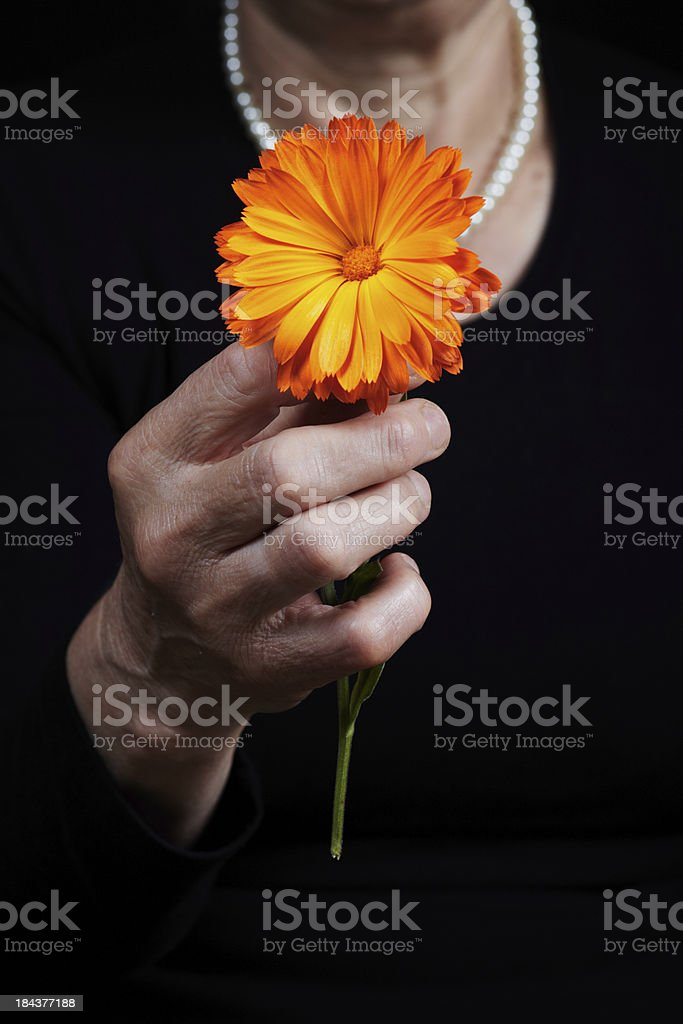 The flower stock photo
