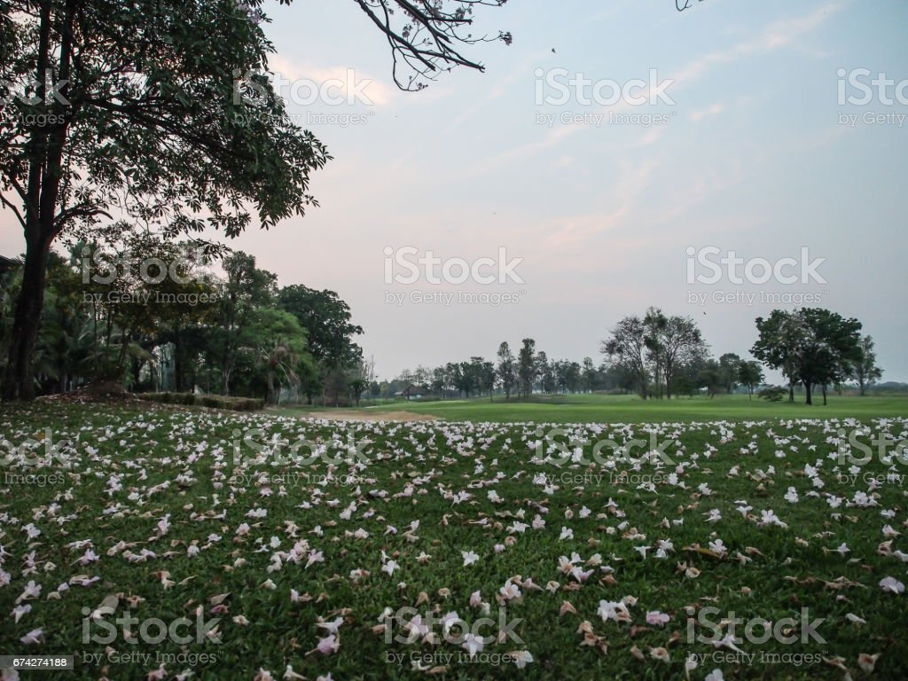The flowers are falling down on the green grass. stock photo