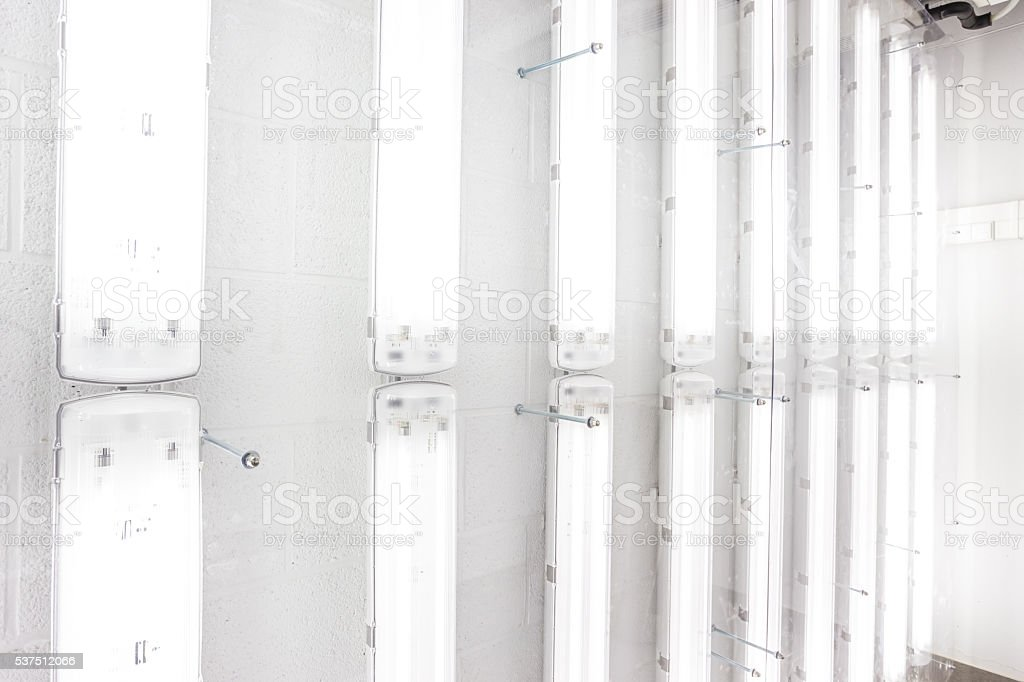the fluorescent lamps stock photo