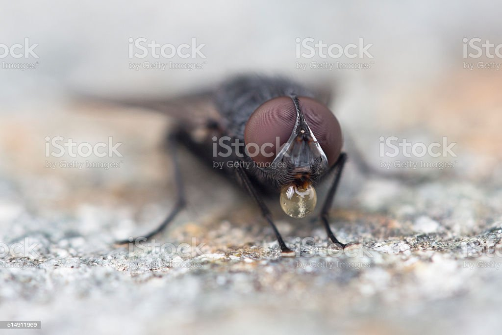 the fly in action stock photo