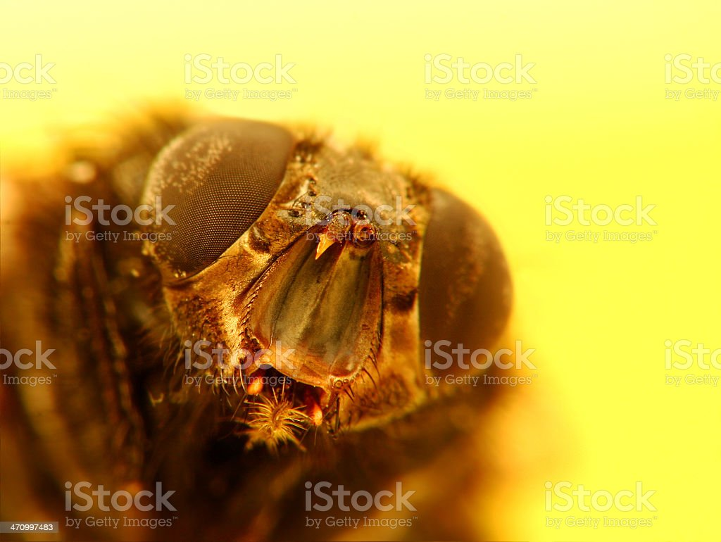 tHe FLy royalty-free stock photo