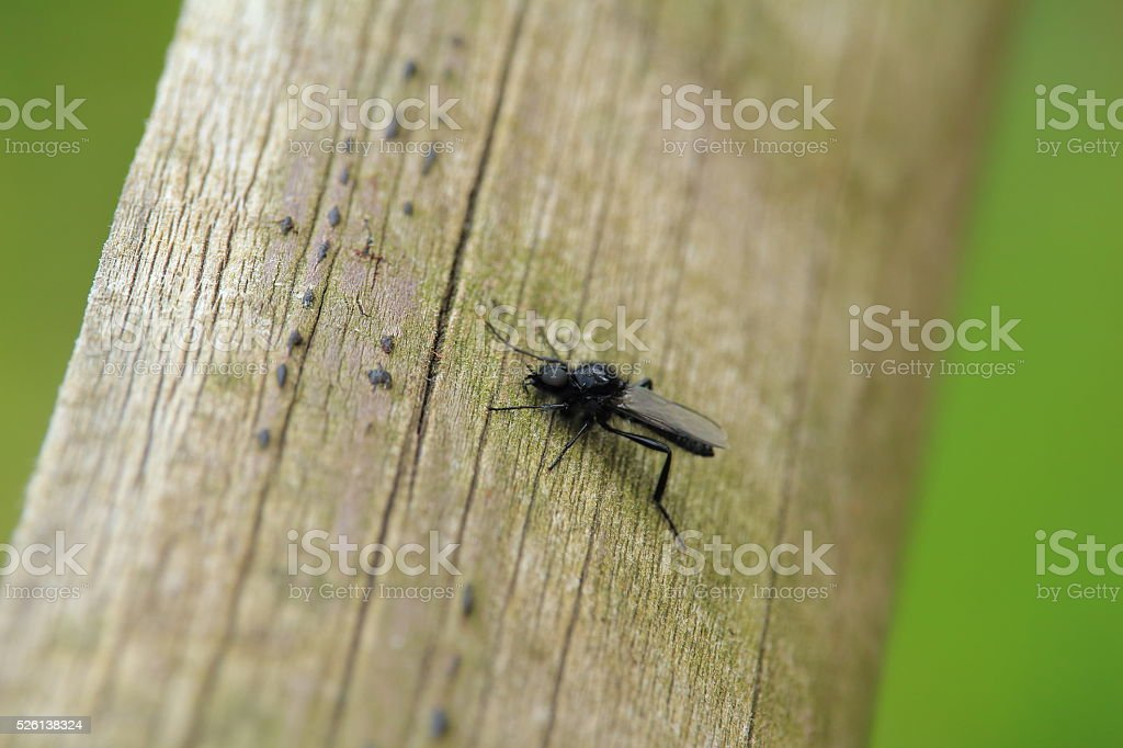 die Fliege stock photo