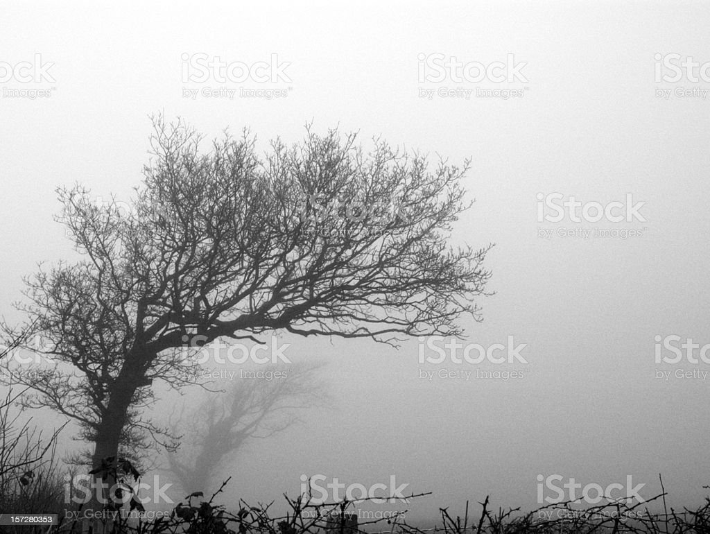 the fog royalty-free stock photo