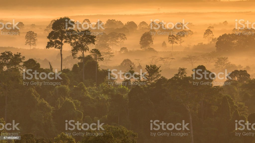 the forest around Hin Pad, Khiri Rat Nikhom District, Surat Thani, Thailand stock photo