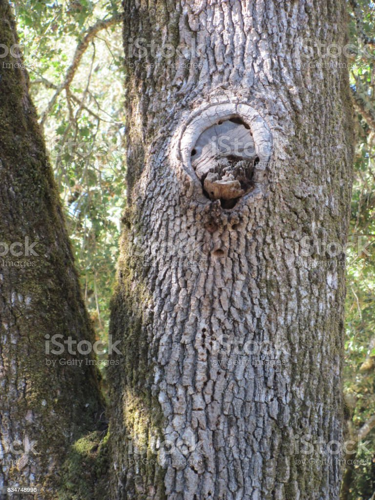 The forest is watching you! stock photo