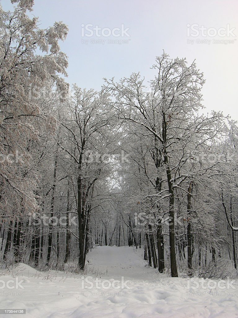 The forest path royalty-free stock photo