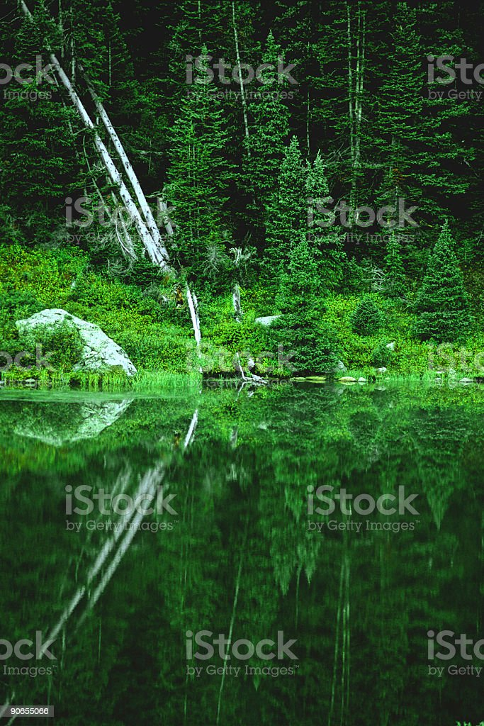 the forest royalty-free stock photo