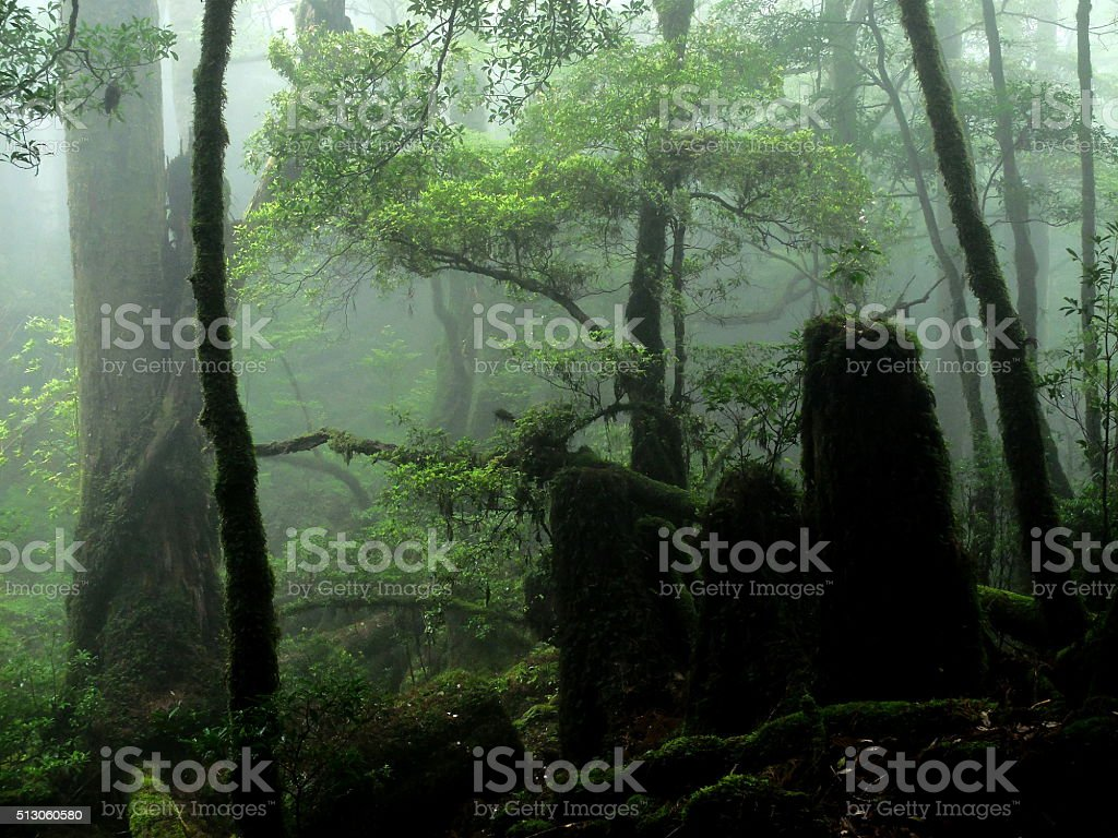 The forest which reproduced. stock photo