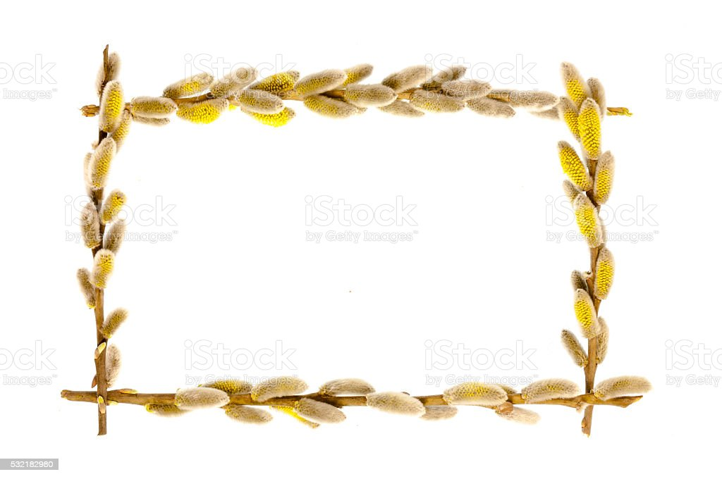 The frame of willow branches. stock photo