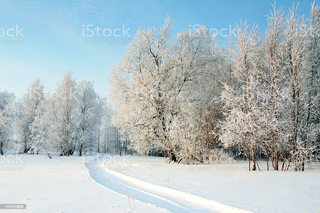 The Freezing day royalty-free stock photo