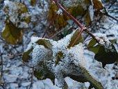 The frozen branch