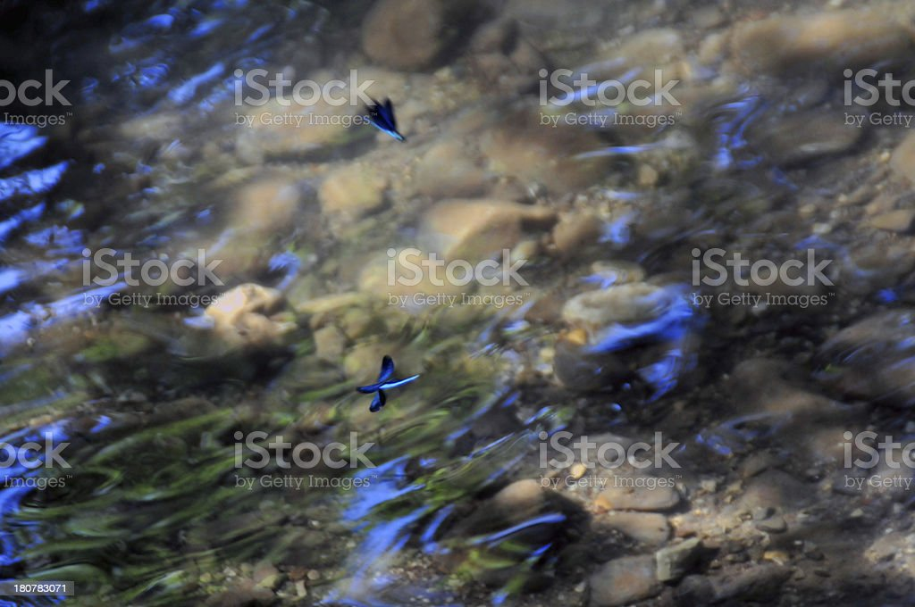 The game of dragonflies royalty-free stock photo