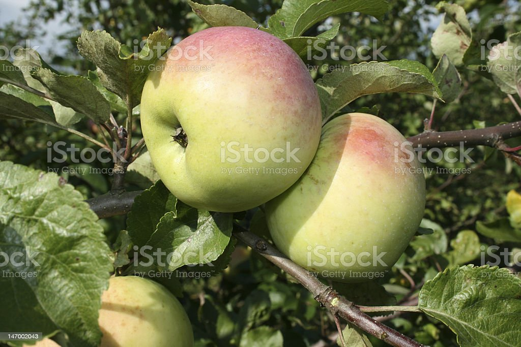 The garden convenience food. royalty-free stock photo