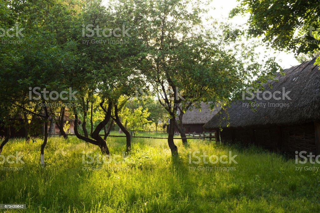 The garden in the Ukrainian village stock photo
