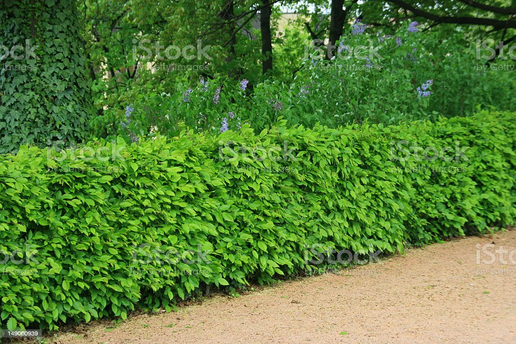 The garden of Zwinger royalty-free stock photo