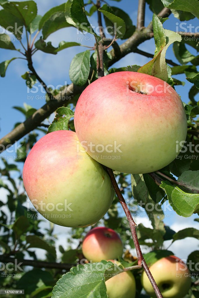 The garden product. royalty-free stock photo
