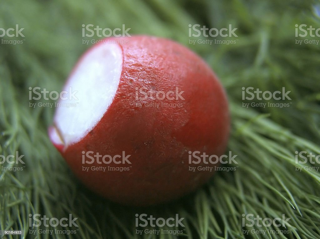 The garden radish stock photo