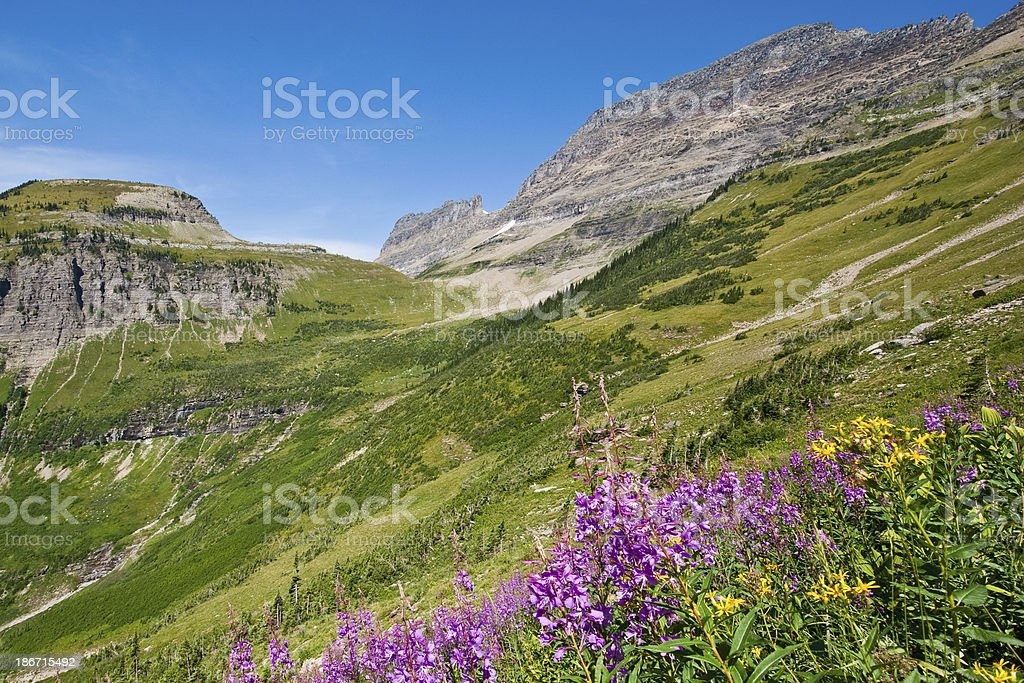 Meadow of Fireweed Below Haystack Butte royalty-free stock photo