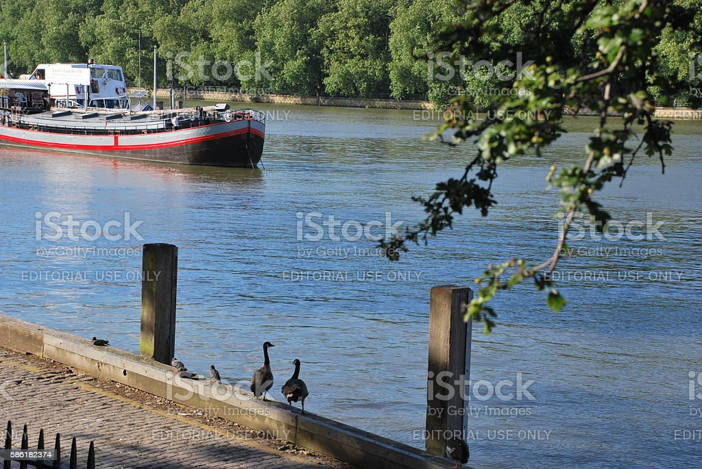The Geese stock photo