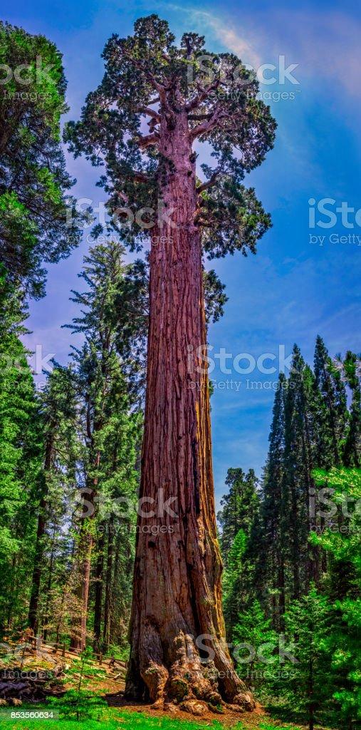 The General Grant giant Sequoia Tree, Sequoia National Park, California, USA stock photo