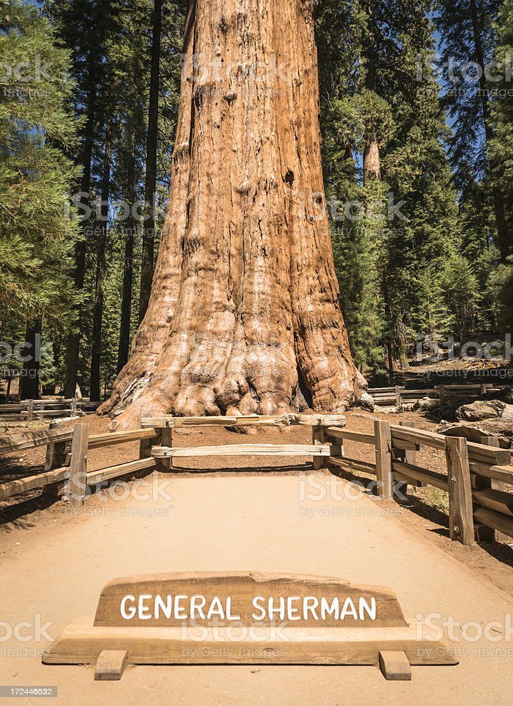 The General Sherman huge redwood Sequoia at National Park stock photo