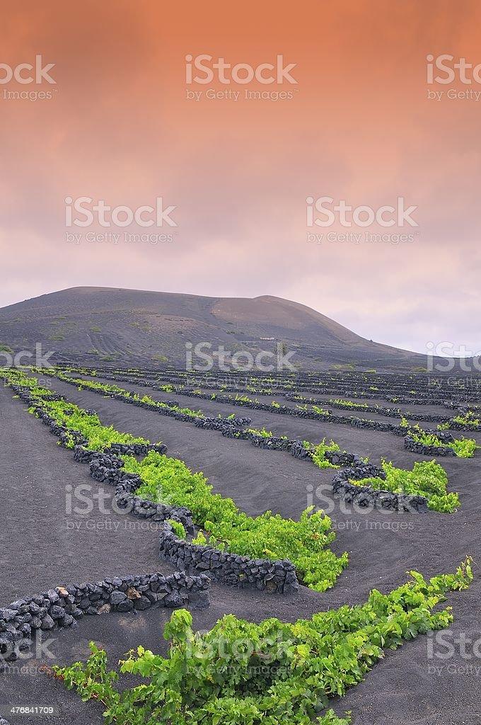 The Geria vineyards, Lanzarote, Spain. stock photo