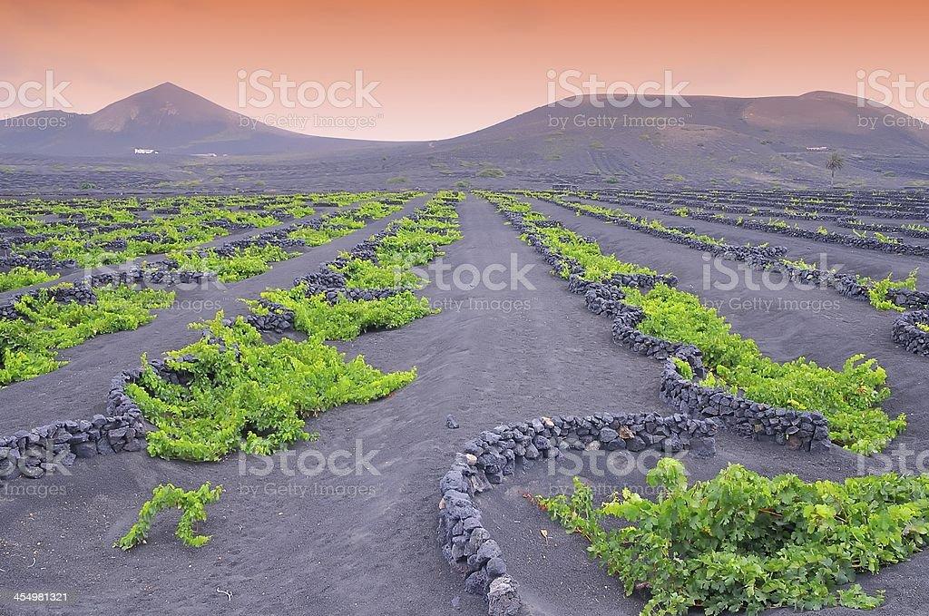 The Geria vineyards. stock photo