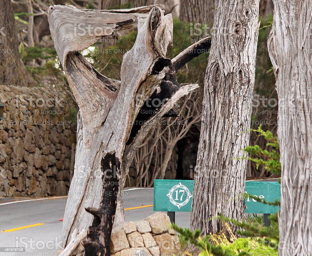 The Ghost Tree along 17 mile drive, Monterey, CA stock photo