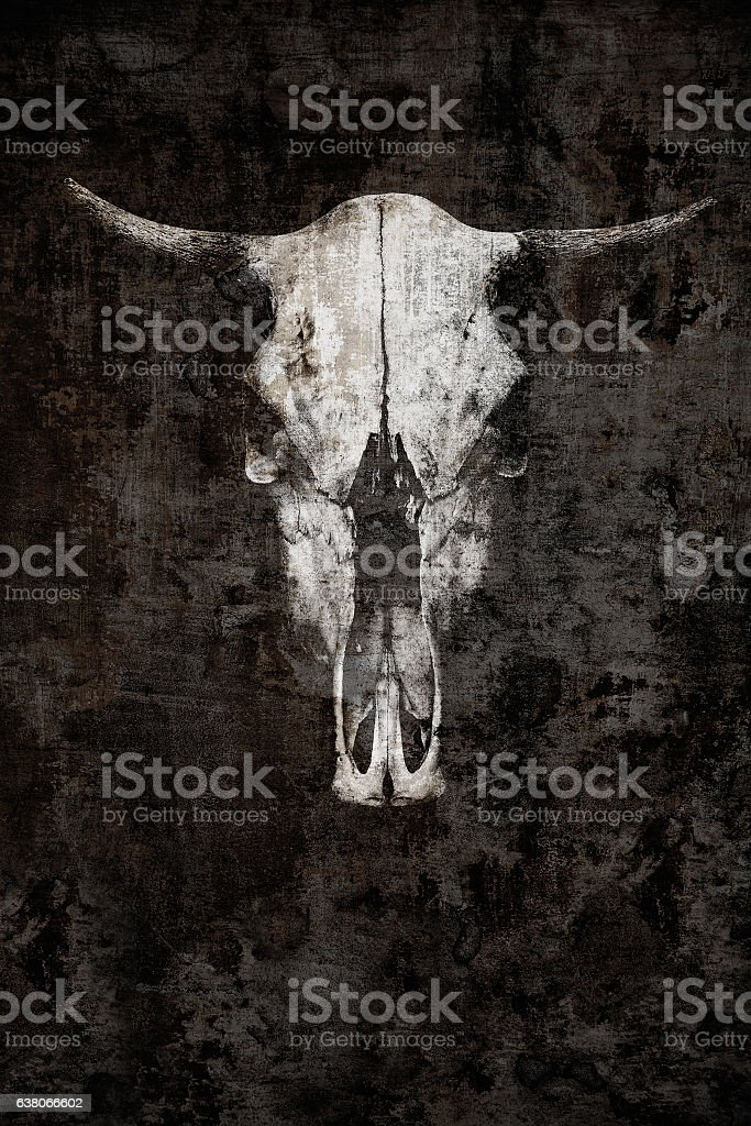 The ghostly skull of a bull on a black background stock photo