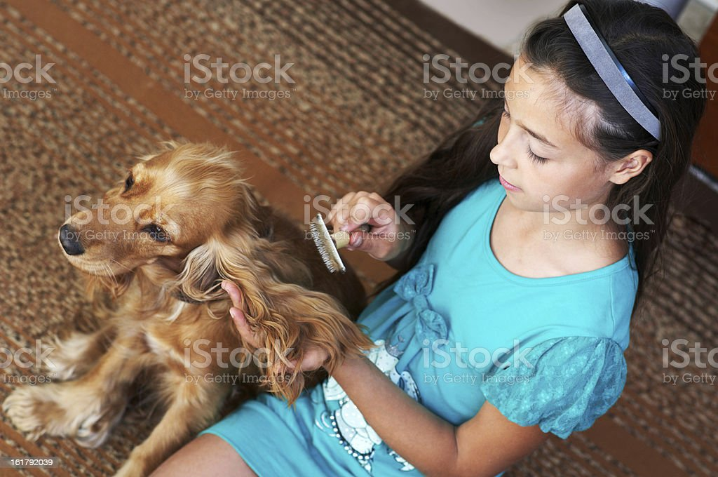 The girl is combing dog royalty-free stock photo