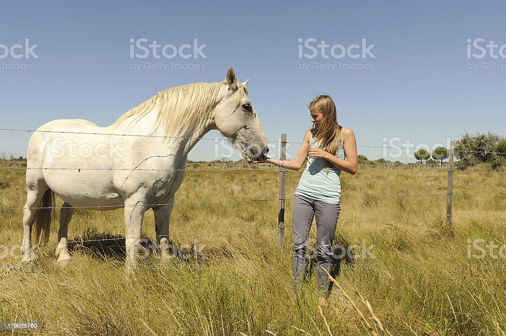 The girl stroking horse royalty-free stock photo
