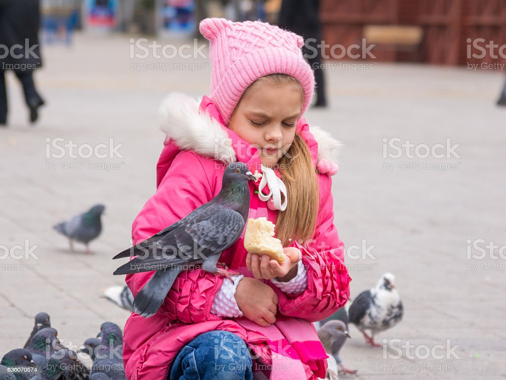 The girl was frightened brazen pigeon who jumped into stock photo