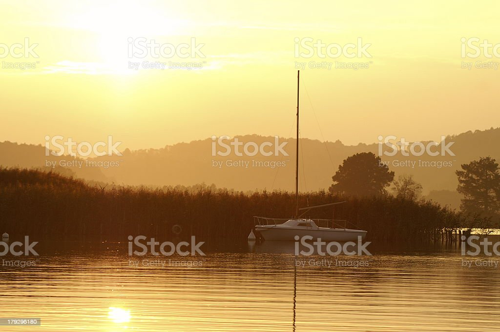 the gold royalty-free stock photo