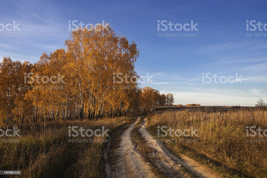 the golden autumn in a field at sunset royalty-free stock photo