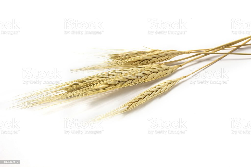 The golden barley on white background stock photo