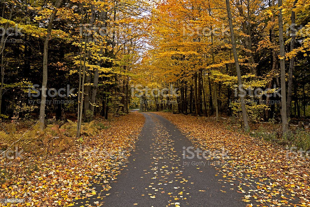 The golden path royalty-free stock photo