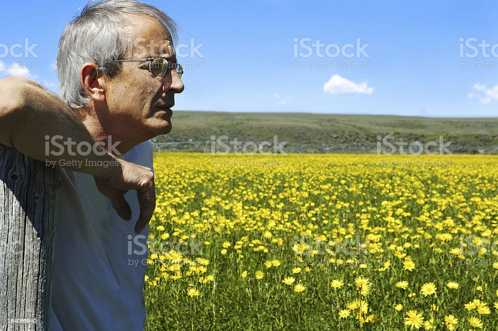 The Golden Years royalty-free stock photo
