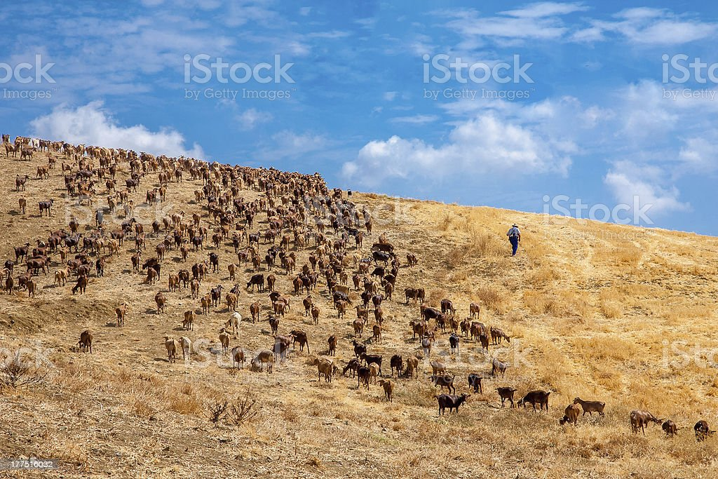 The good shepherd stock photo