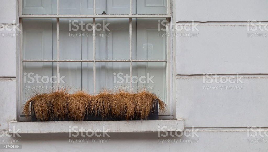 The Grass Died. stock photo