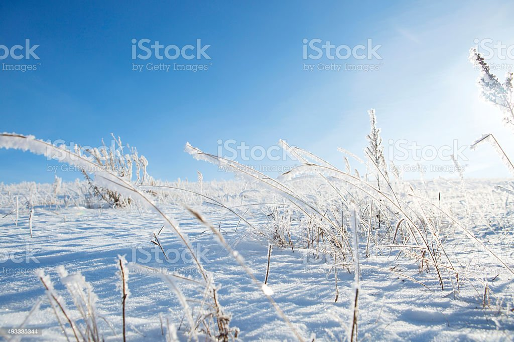 The grass in the frost. stock photo