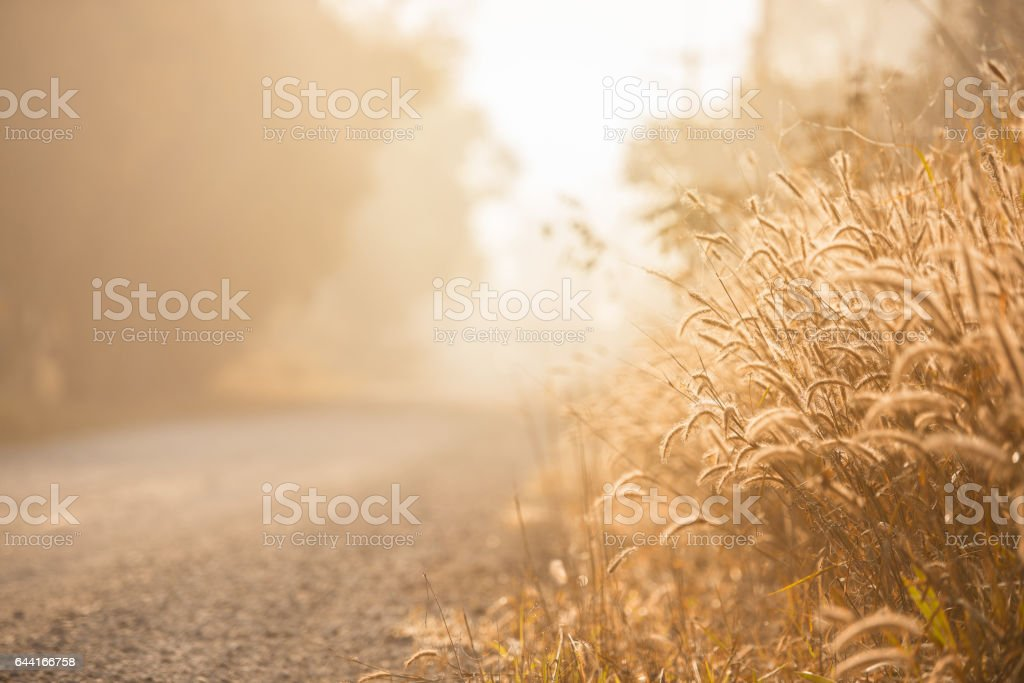 The grass in the morning stock photo