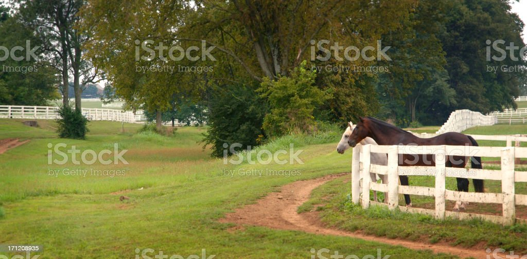 The Grass is Always Greener stock photo