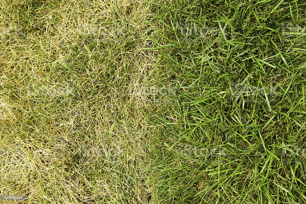 The Grass is Greener on Other Side stock photo