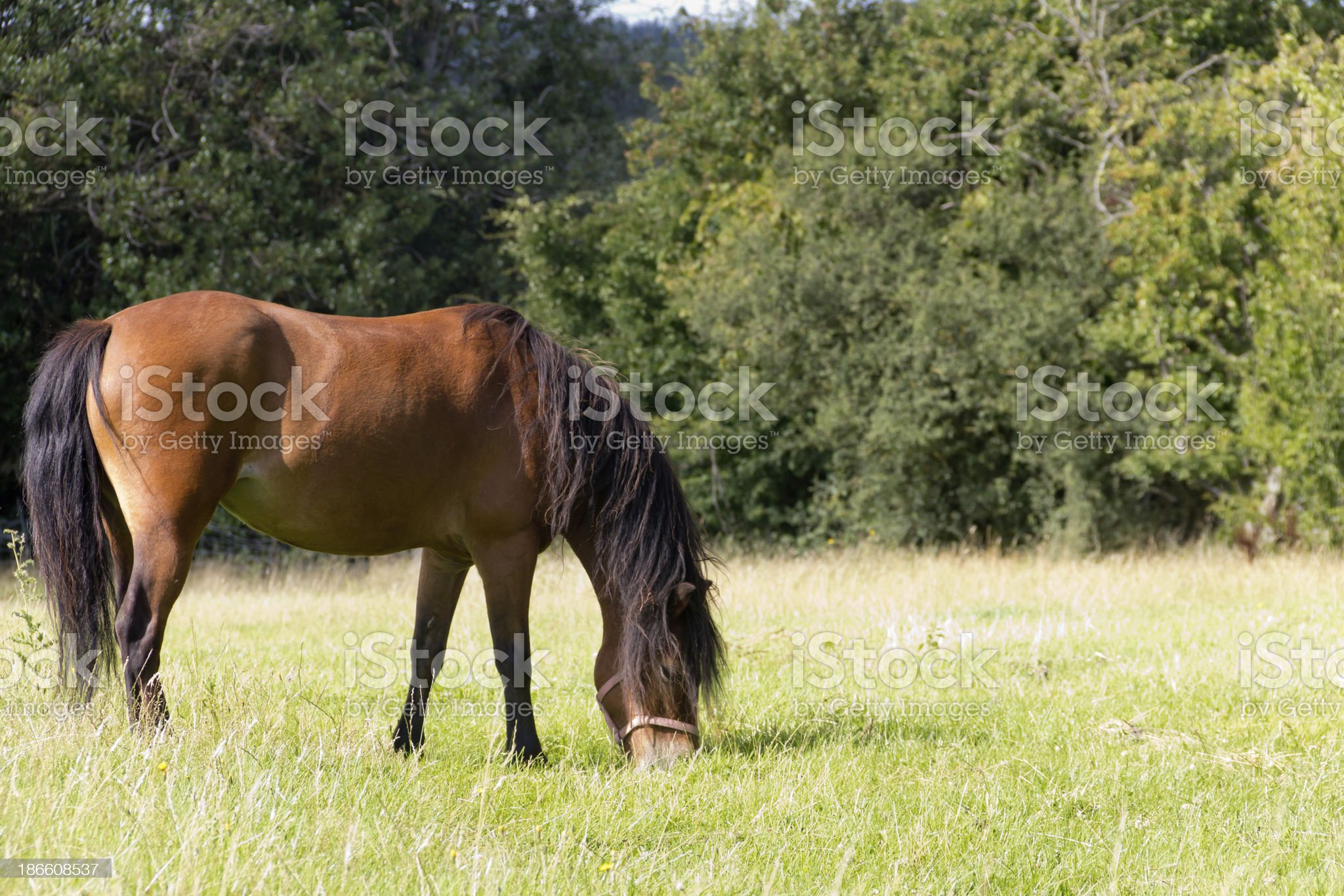 The grass is greener... royalty-free stock photo