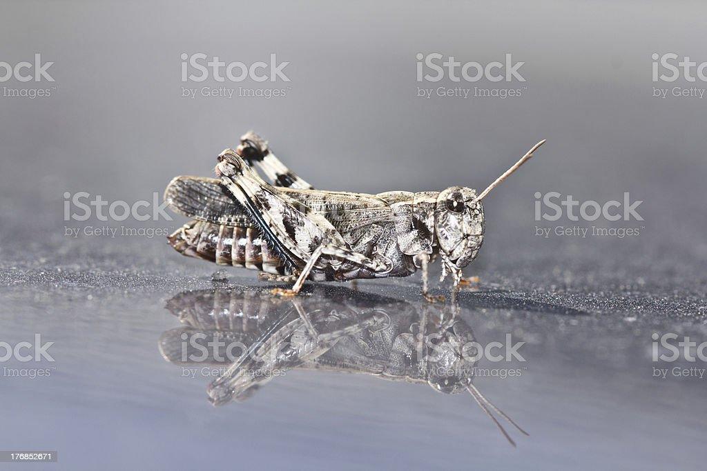 The grasshopper stock photo