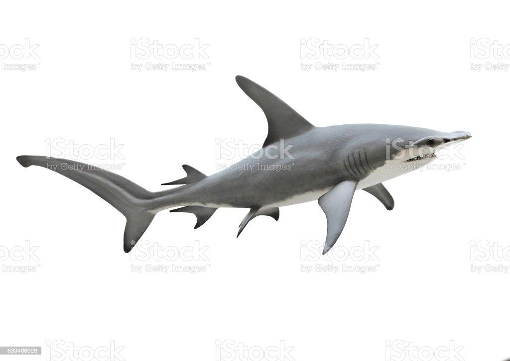 The Great Hammerhead Shark - Sphyrna mokarran. stock photo