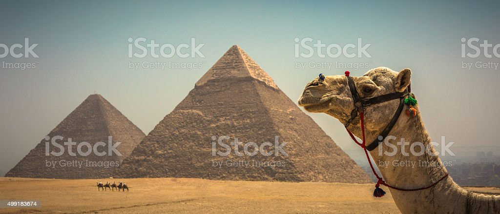 The Great Pyramids and Camels stock photo