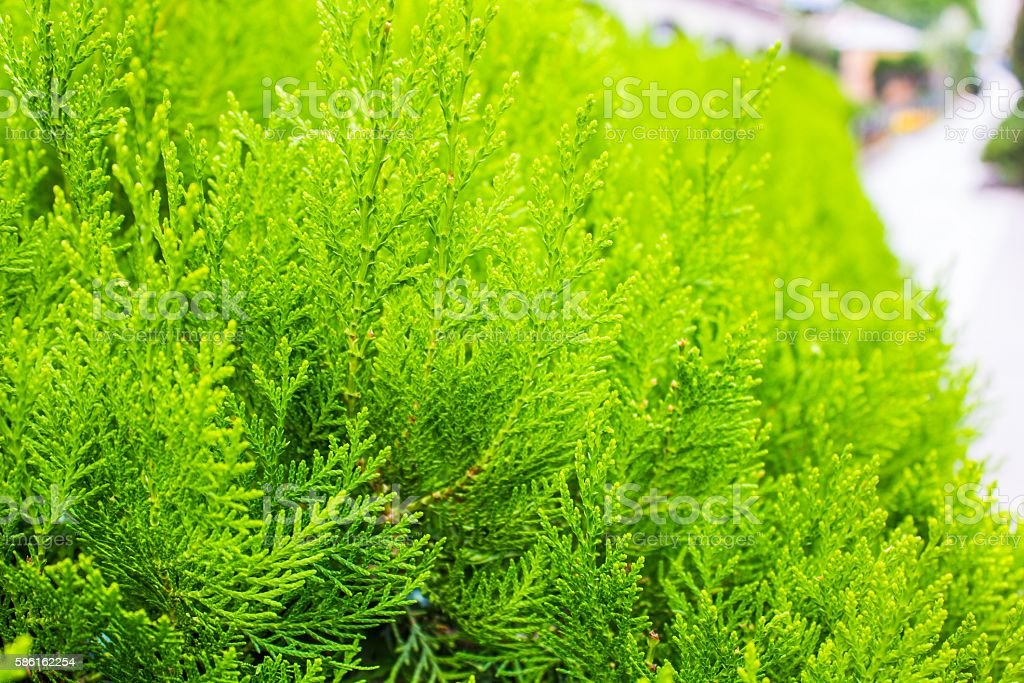 The green bushes stock photo