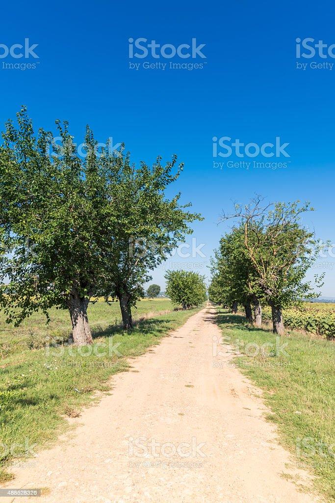 The green countryside in Cortona, Tuscany stock photo
